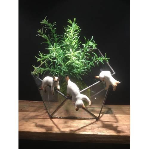 Chat pour bord vase