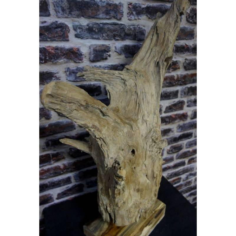 Racine de bois de Teck - Liber