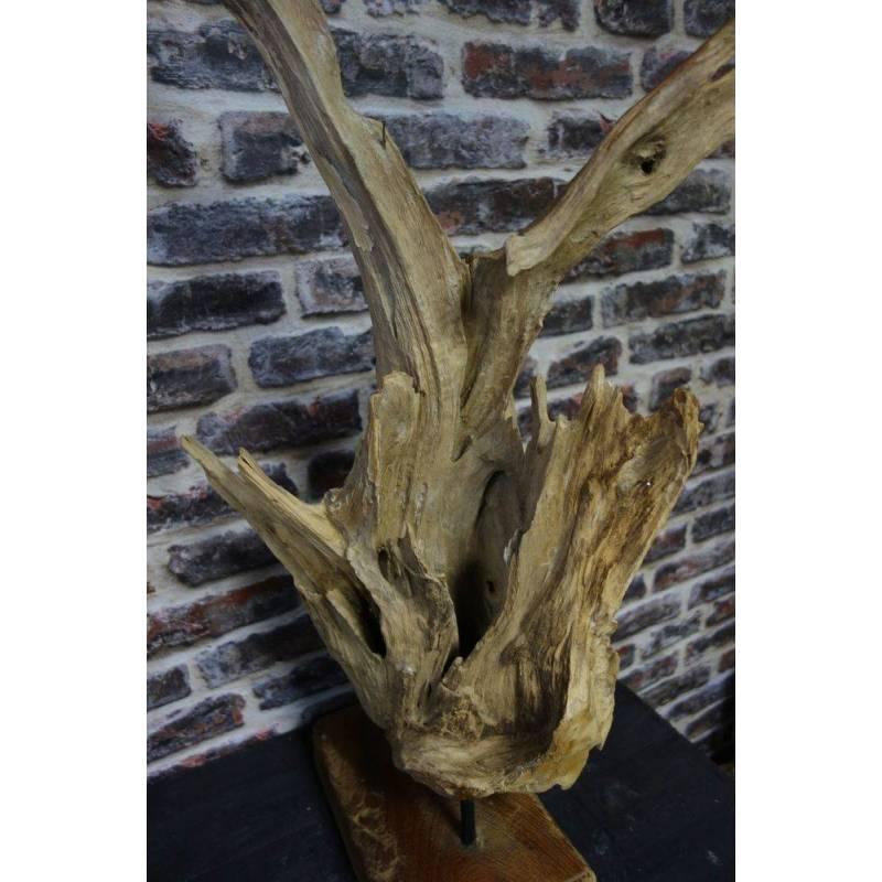 Racine de bois de Teck - Phellogène